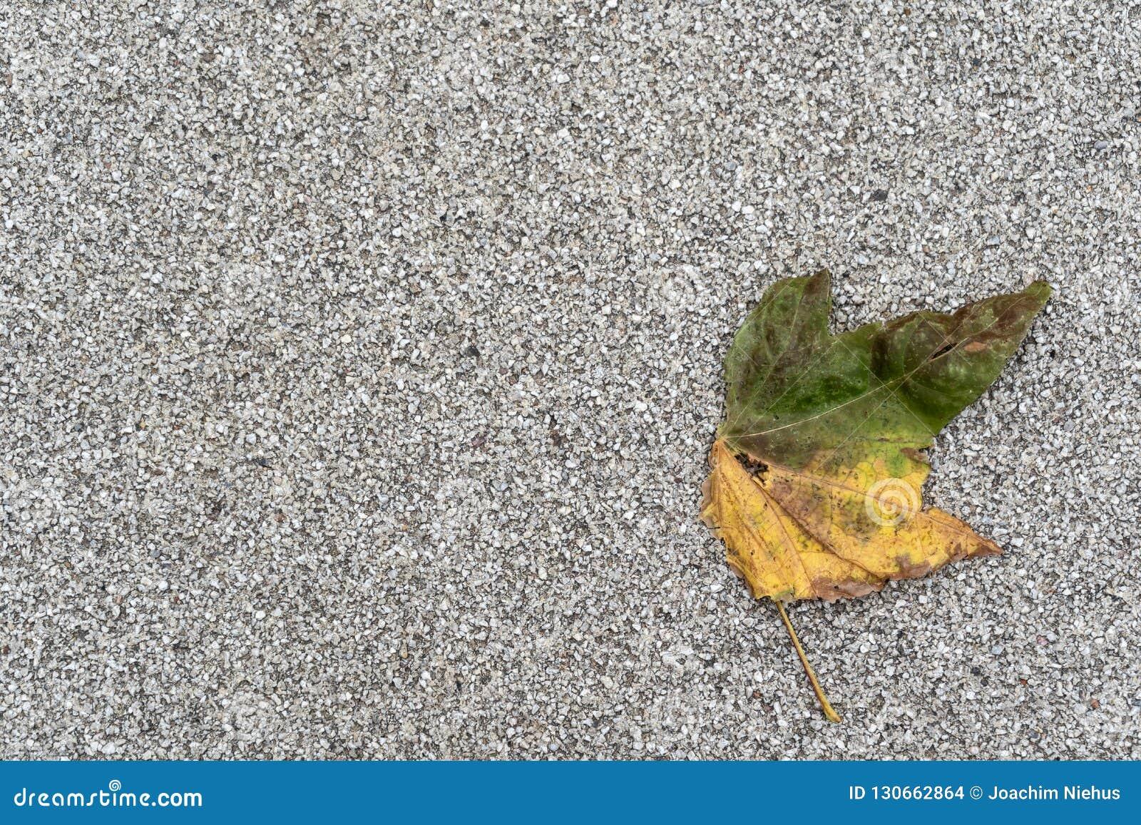 Jesienny wyblakły liść na szarym tle z obfitością policjant