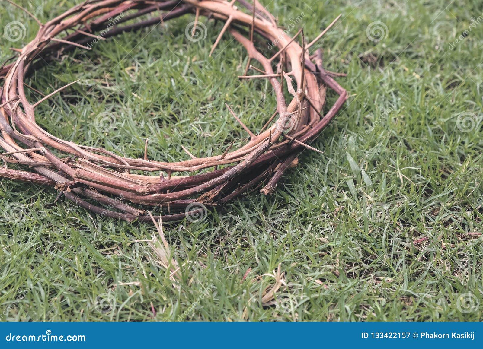 Jesus Christ Crown Thorns no gramado da grama do jardim com termas da cópia