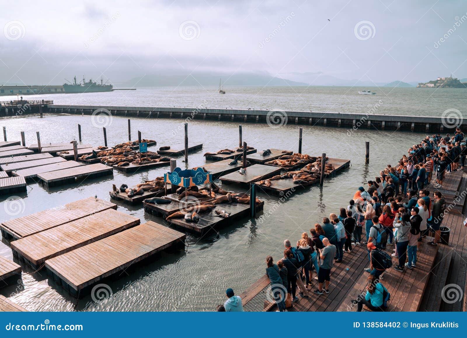 Jetée célèbre 39 avec des otaries à San Francisco, Etats-Unis Vue d île d Alcatraz