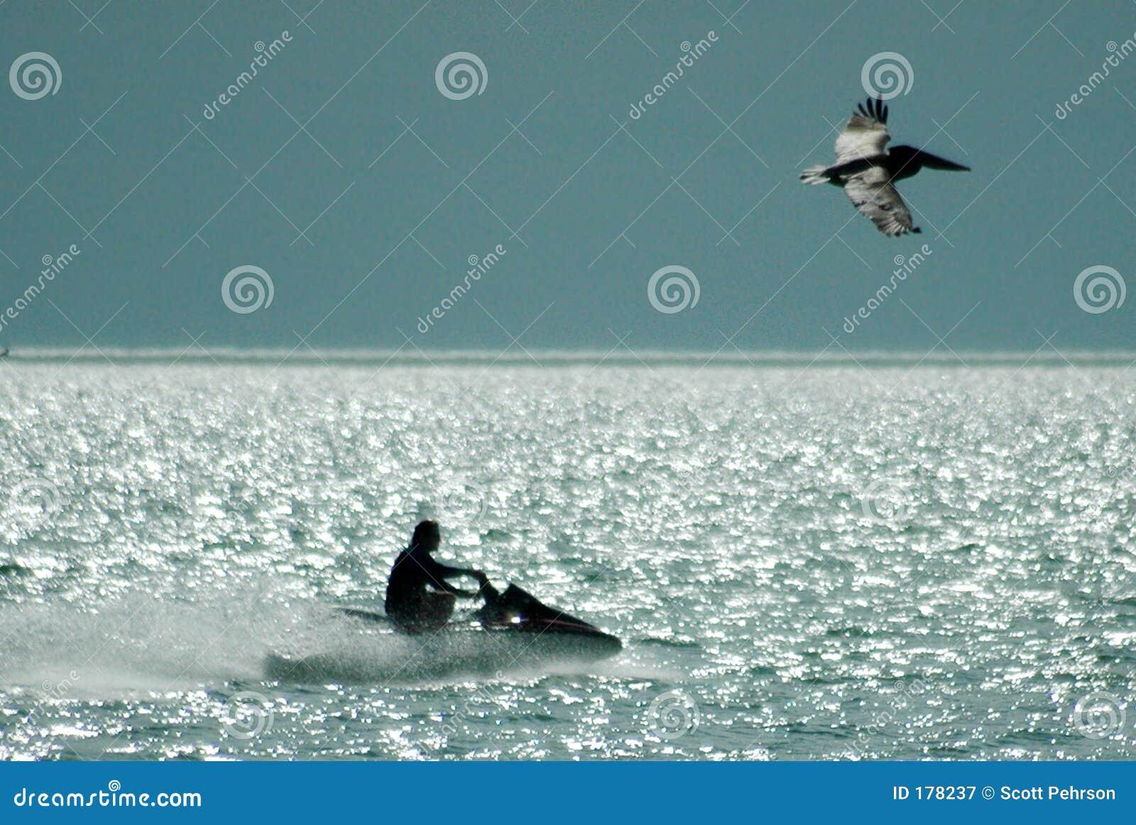 Jet-esquí y pelícano