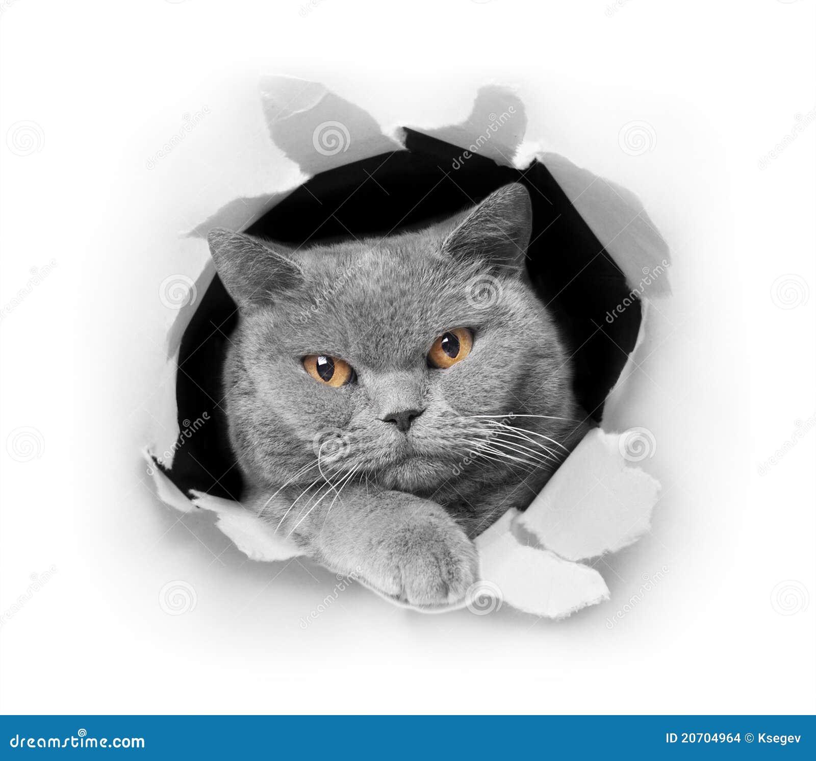 Jeter un coup d 39 oeil de chat images stock image 20704964 - Telemoustique coup d oeil ...