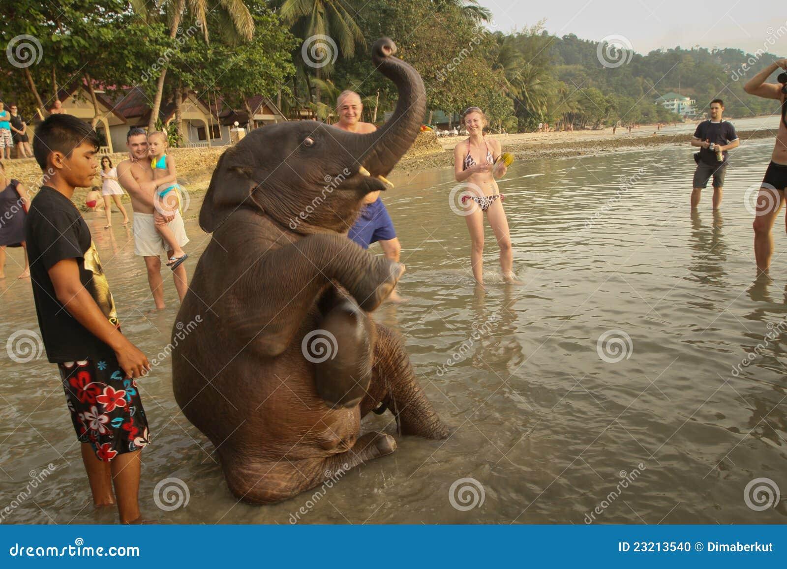Jeune éléphant d Asie