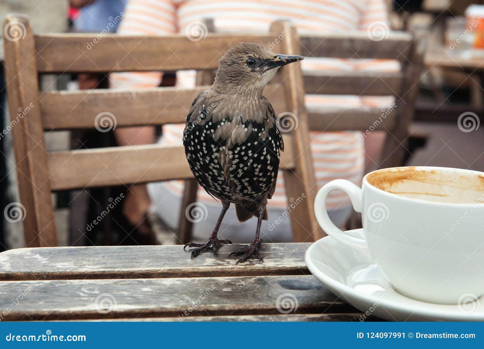 Jeune étourneau sur une table en bois avec une tasse blanche