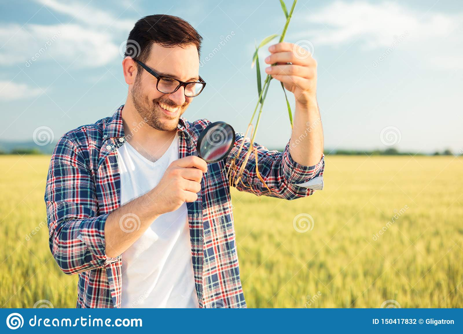 Jeune agronome ou producteur de sourire inspectant la racine d usine de blé avec une loupe