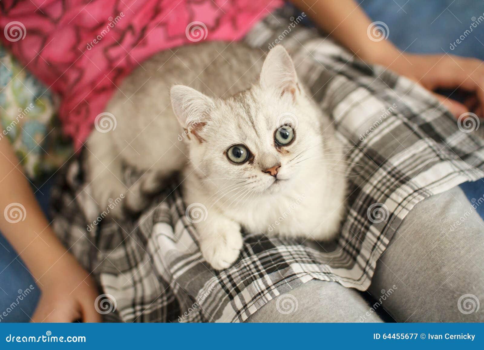 Jeune chaton sur le recouvrement II d une fille
