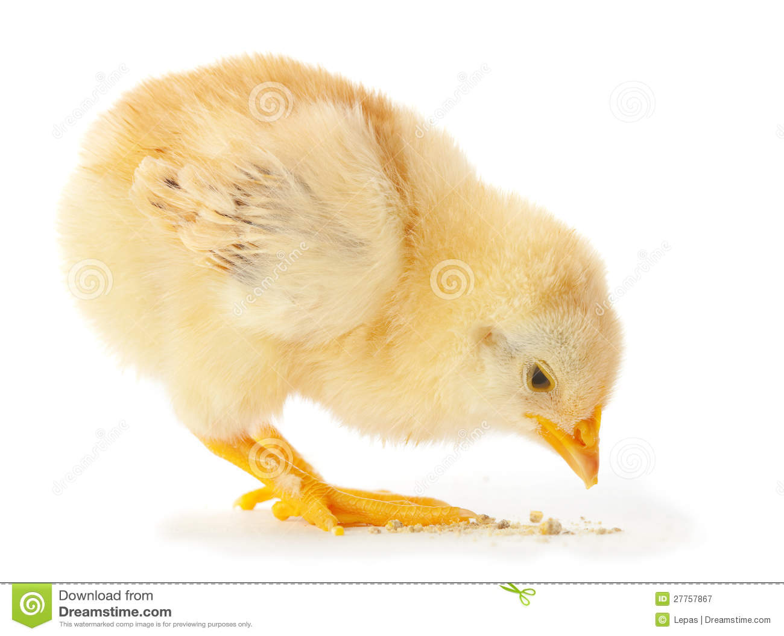 Jeune consommation de poulet