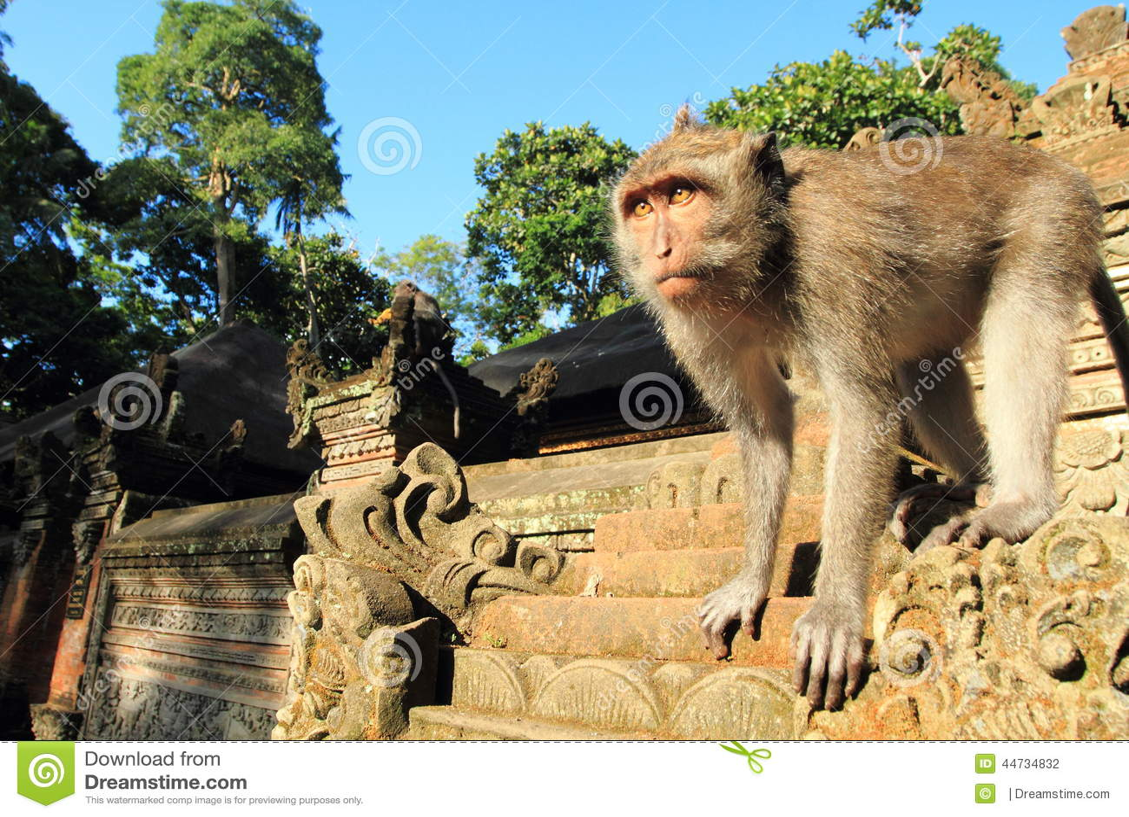 Jeune crabe mangeant le Macaque, temple de singe d Ubud, Bali, Indonésie