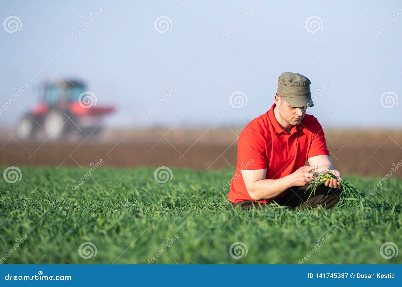 Jeune exploitant agricole examing les champs de blé plantés