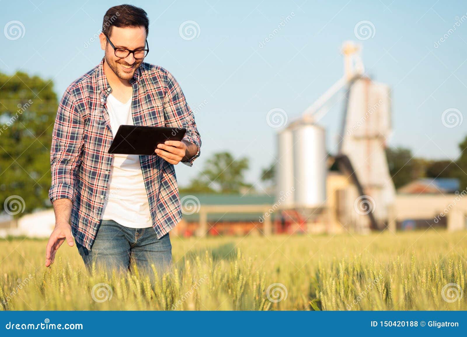 Jeune exploitant agricole ou agronome heureux inspectant des usines de blé dans un domaine, travaillant à un comprimé