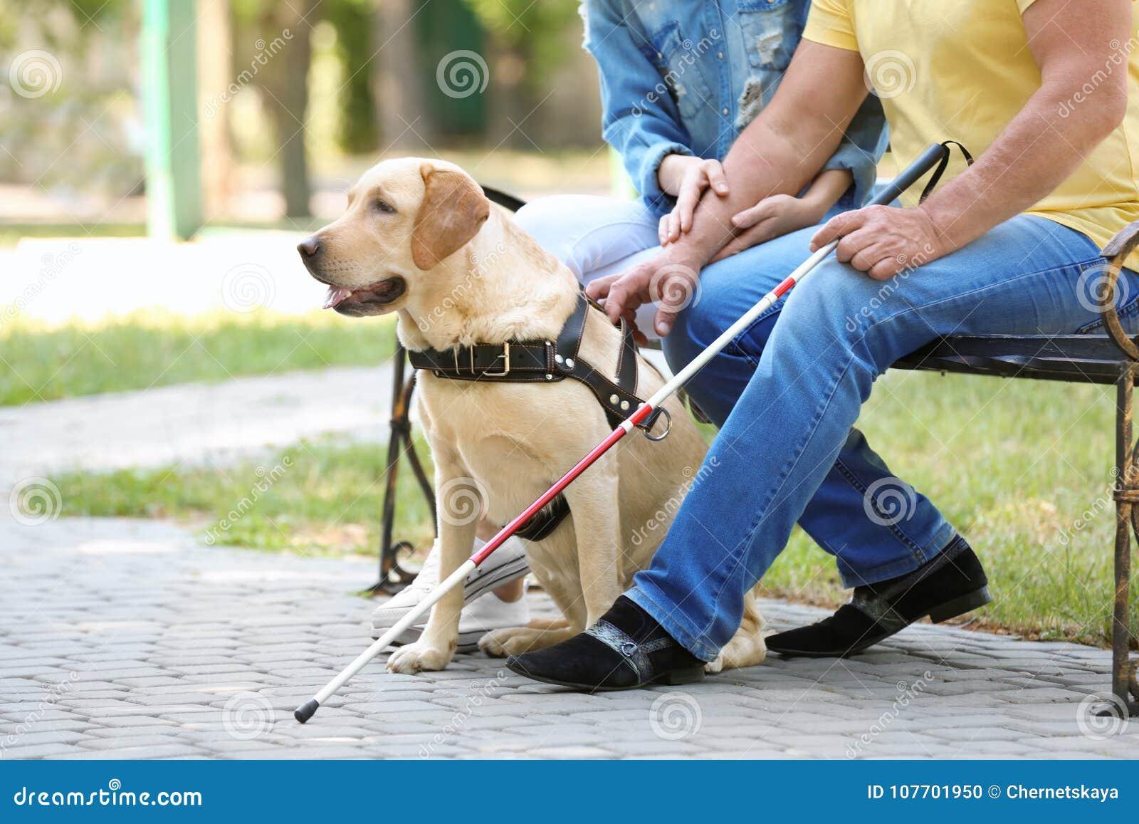 Jeune femme et homme aveugle avec la séance de chien de guide