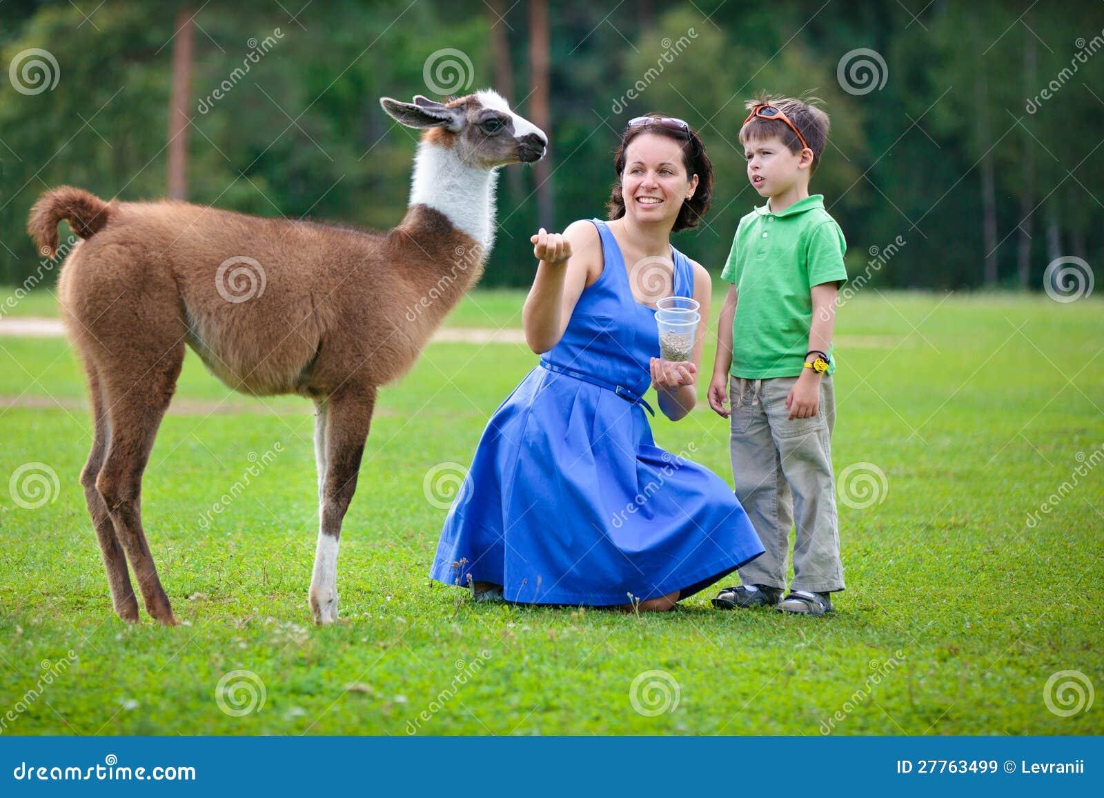 Jeune femme et son lama alimentant de chéri de petit fils