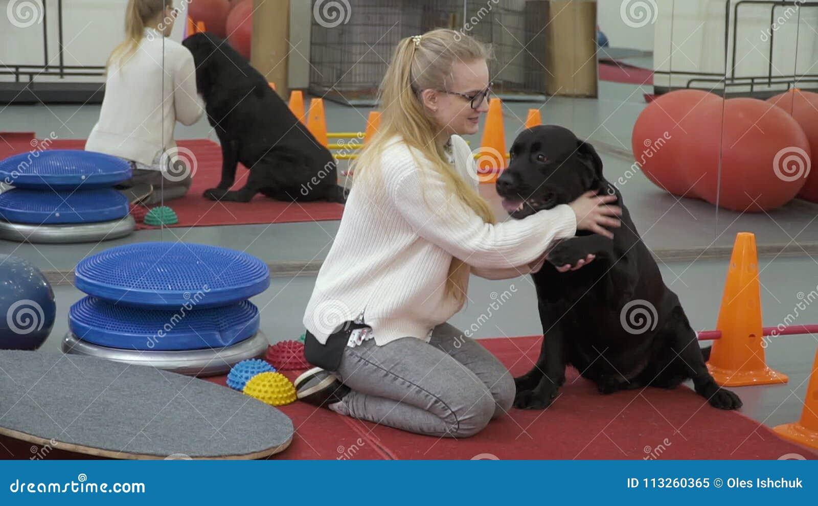 Jeune Fille Formant Labrador Noir Pour Lui Donner Une Patte Clips Videos Video Du Patte Labrador 113260365