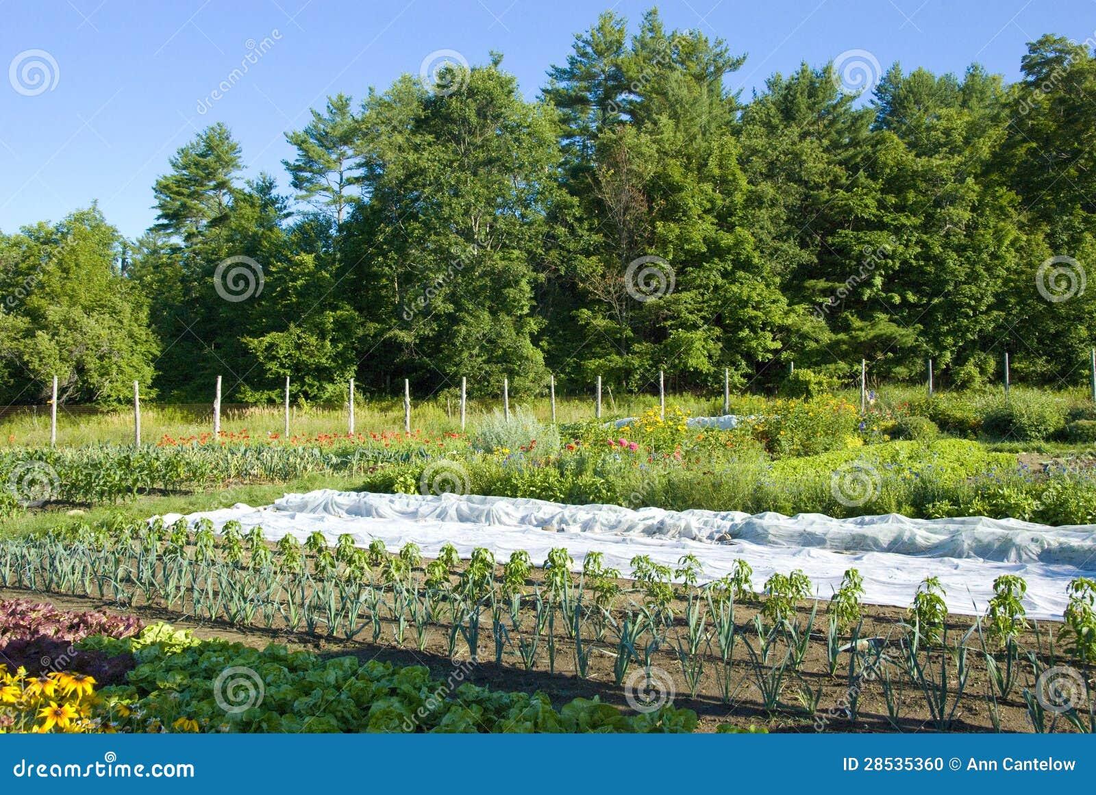 Jeune jardin soigné et rangé