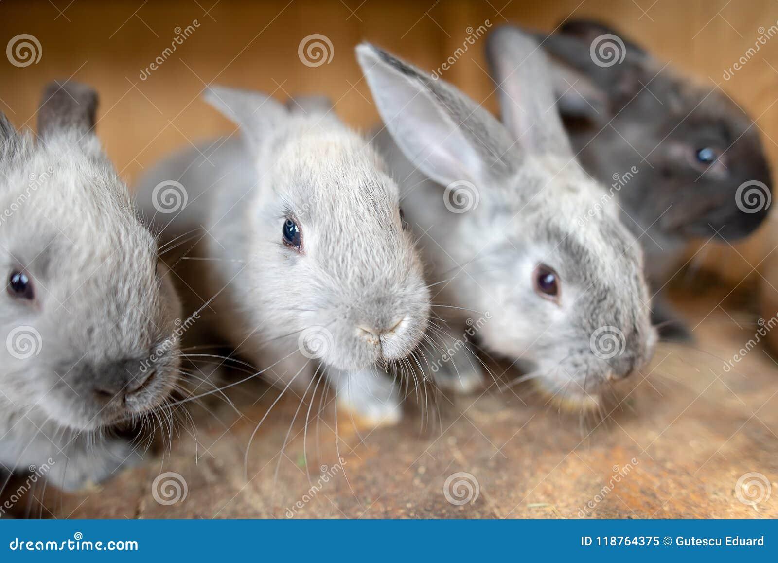 Jeune lapin à l intérieur de la cage en bois à la ferme le temps de Pâques