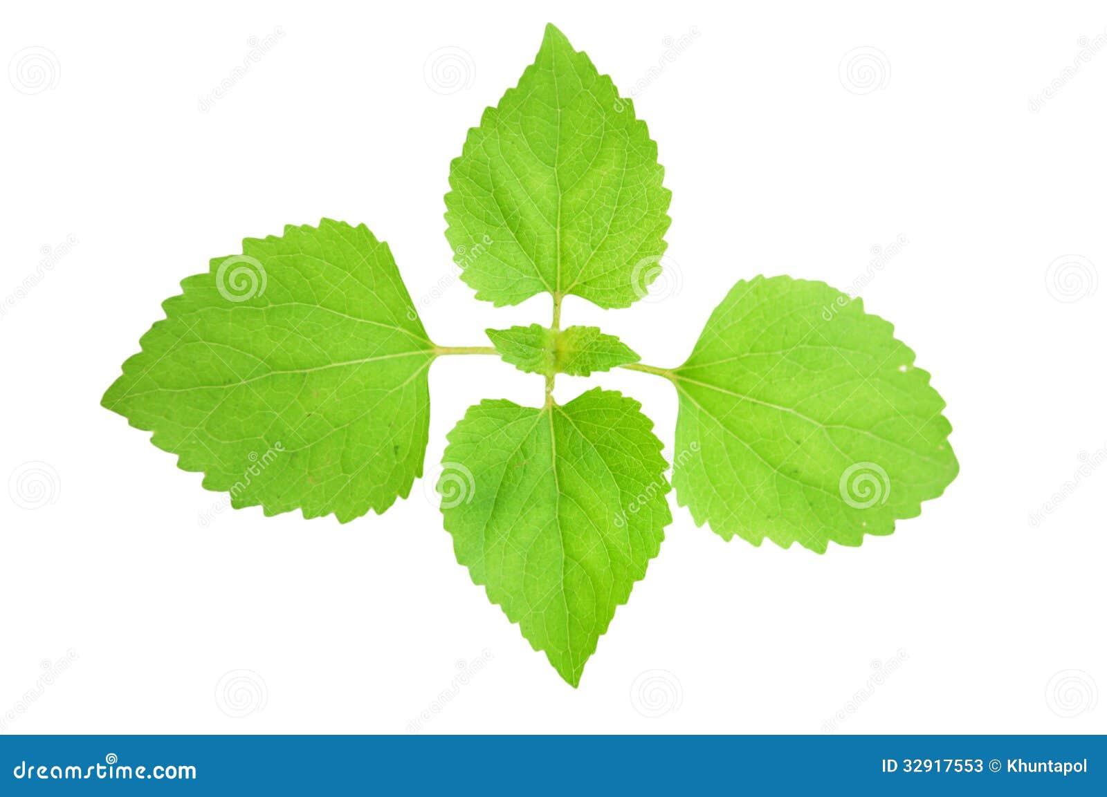 jeune plante verte sur le fond blanc image stock image. Black Bedroom Furniture Sets. Home Design Ideas