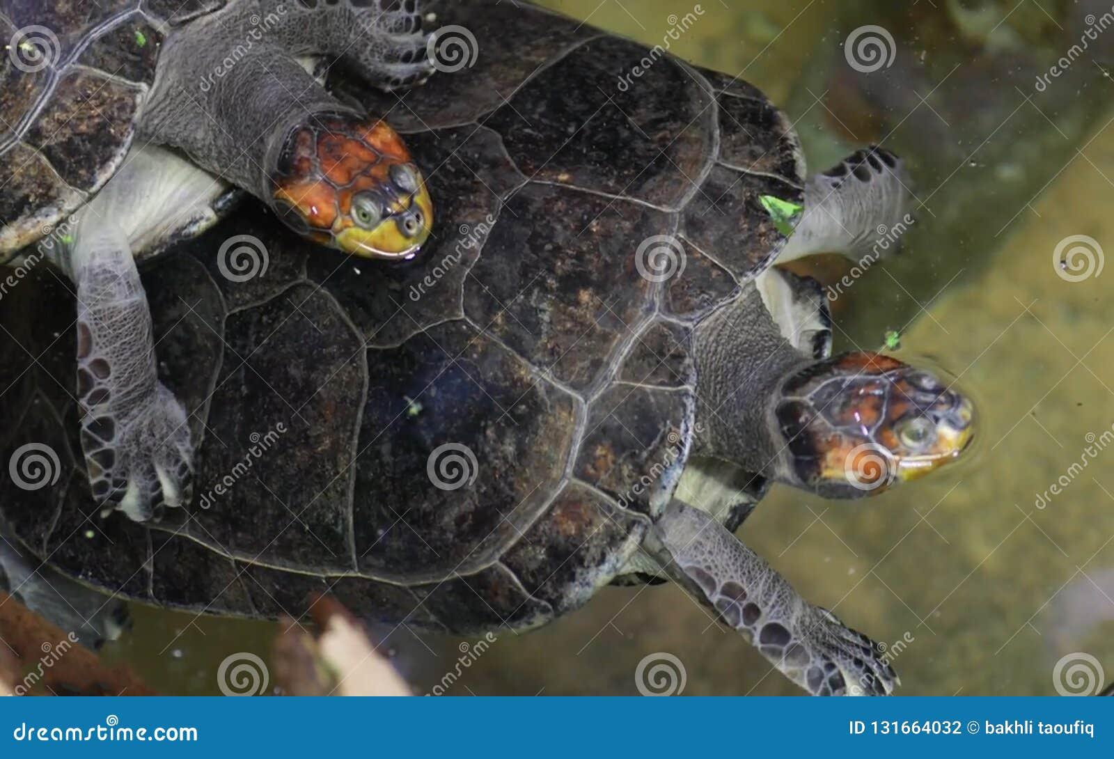 Jeune tortue de mer verte sur la plage