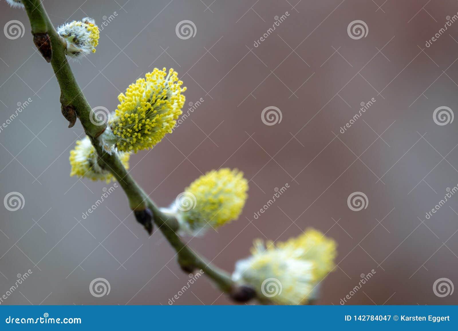 Jeunes bourgeons au printemps
