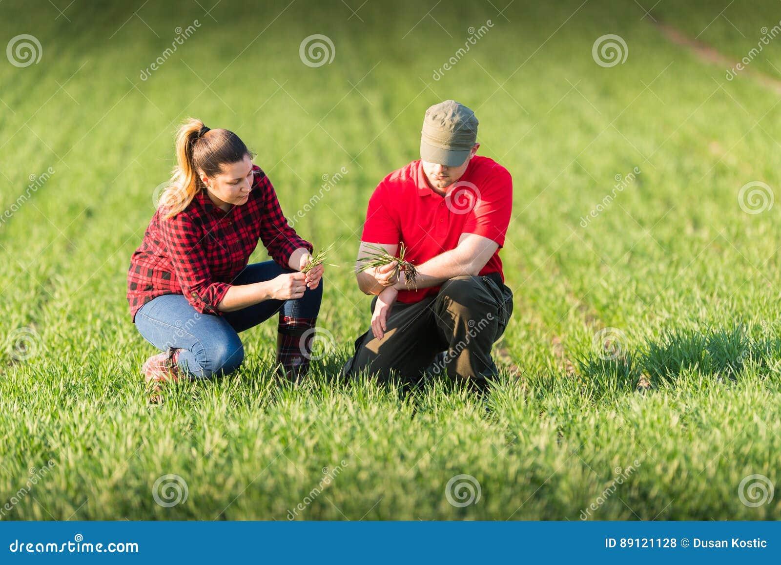 Jeunes exploitants agricoles examing le blé planté dans le domaine