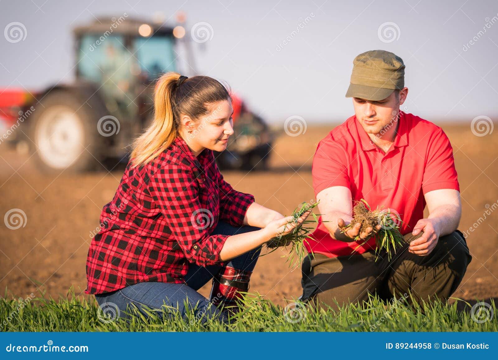 Jeunes exploitants agricoles examing le blé planté tandis que le tracteur laboure le fi