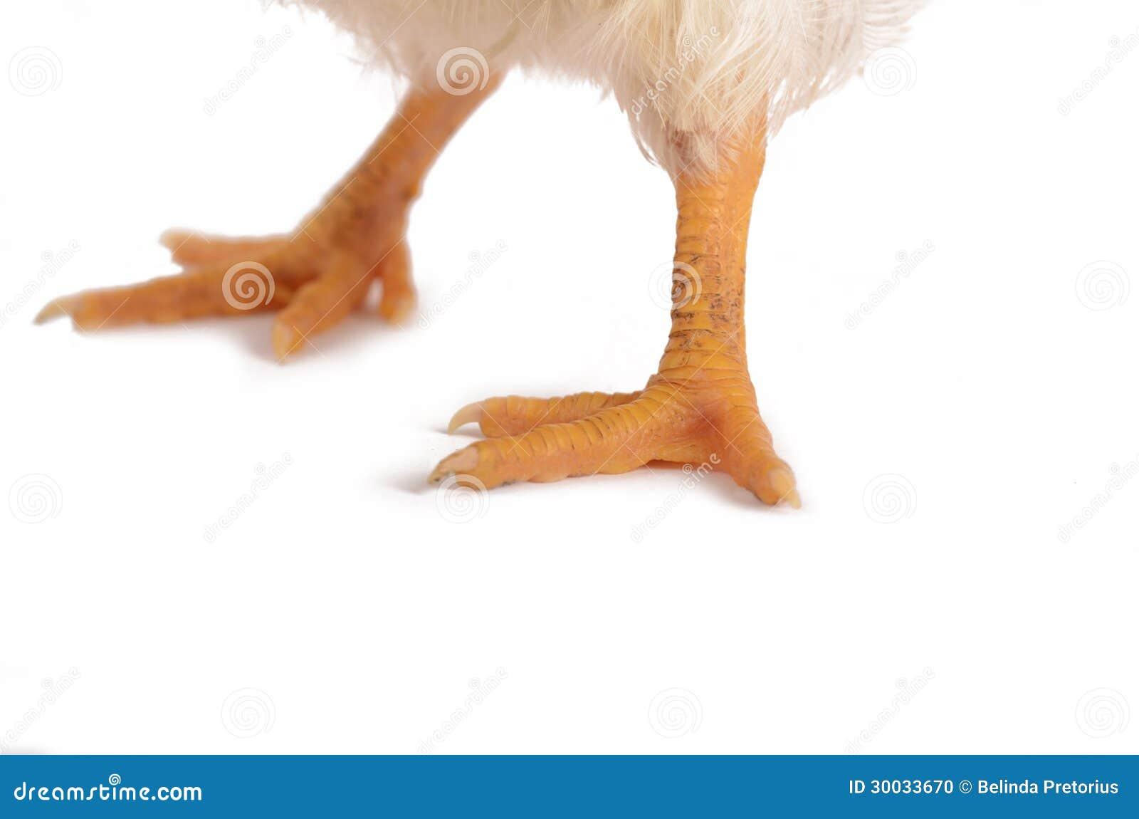 Photo coq et jambes