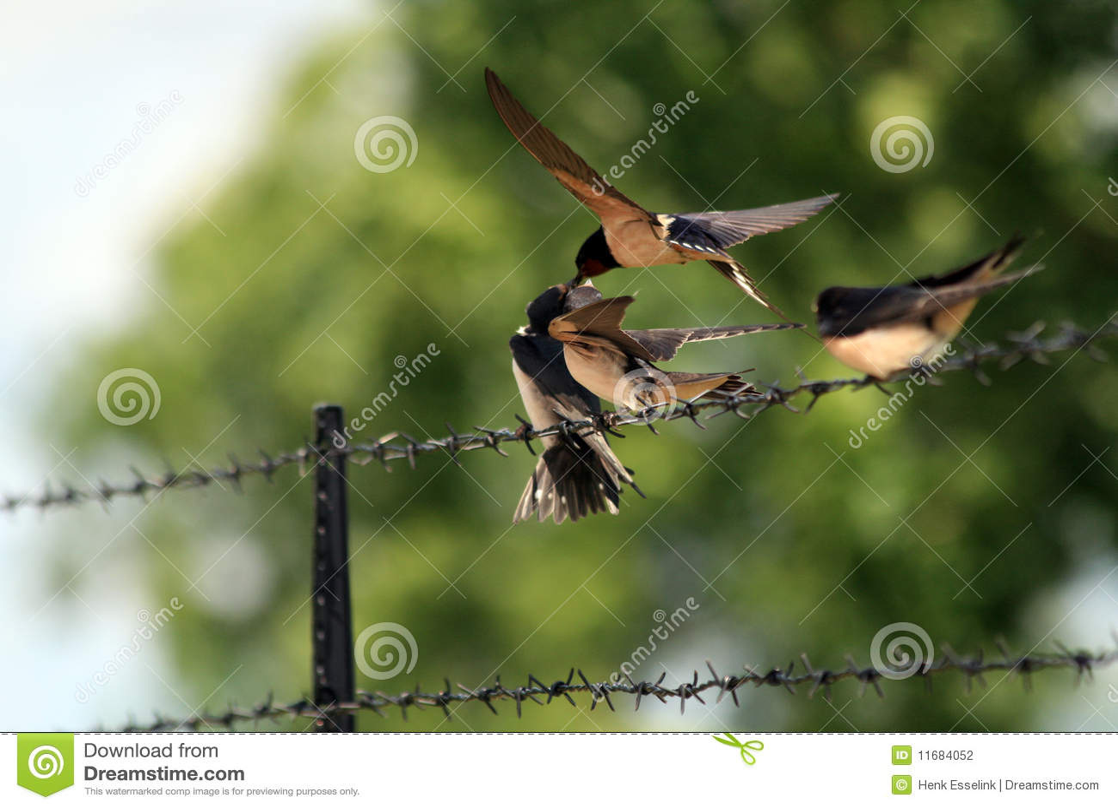 Jeunes oiseaux