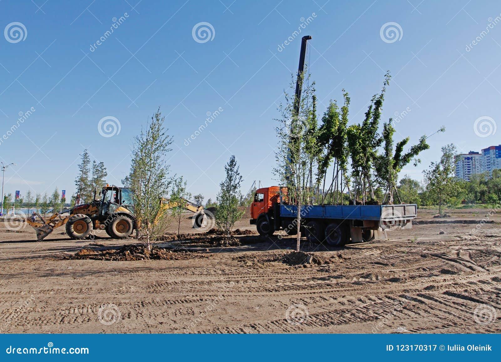 Jeunes plantes d arbre dans un camion prêt pour planter en parc de ville à Volgograd