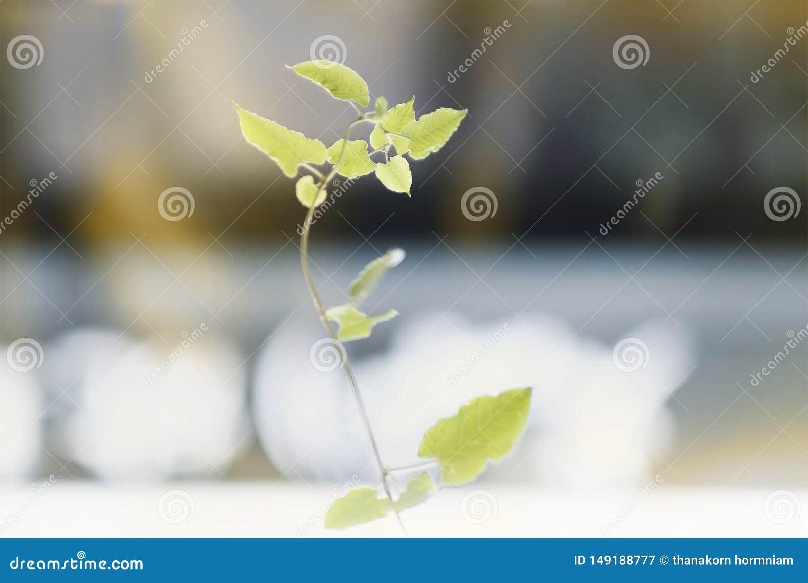 Jeunes plantes d arbre sur la ville