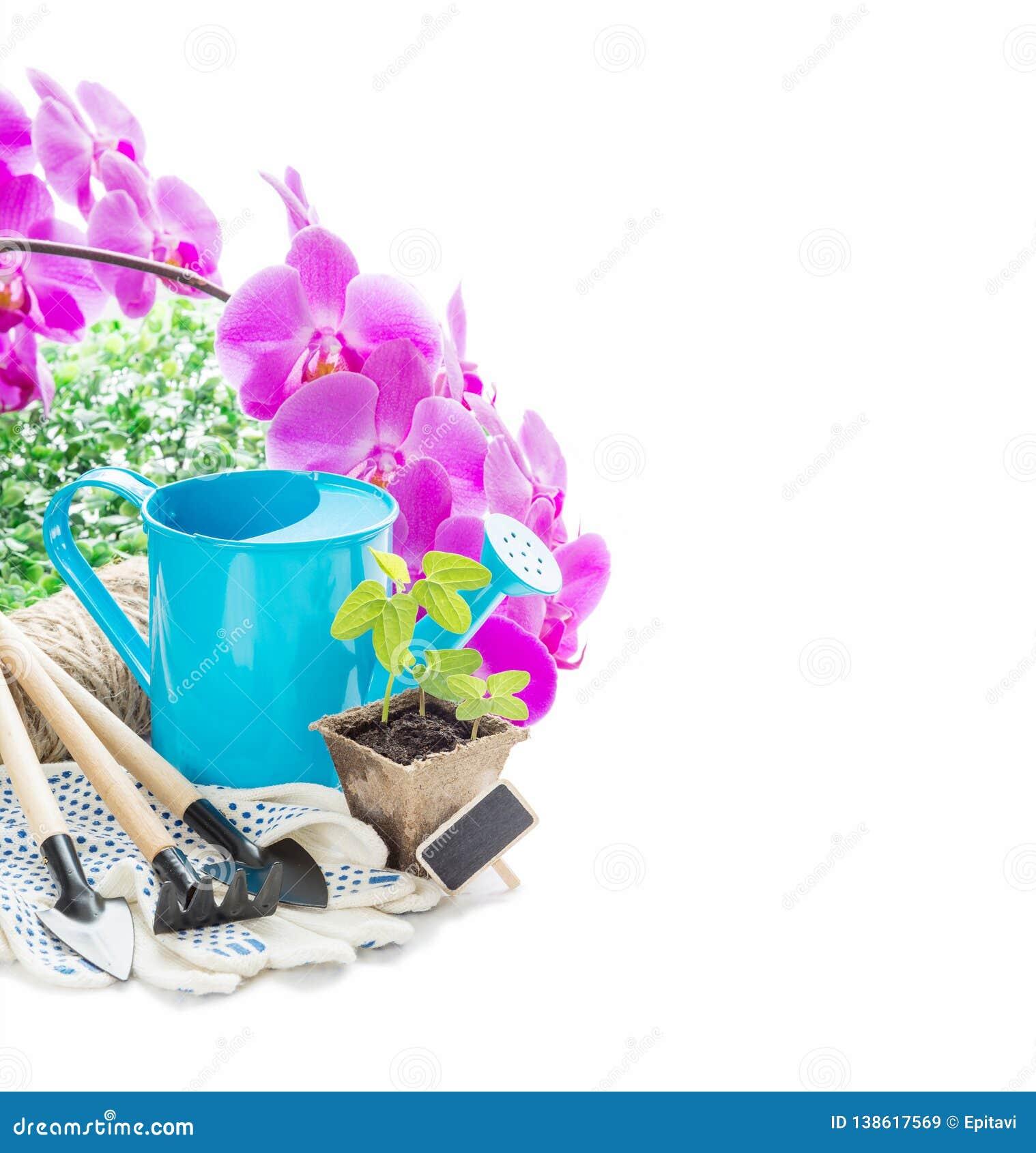 Arrosage Pour Plantes En Pot jeunes plantes dans un pot de tourbe, des fleurs roses d