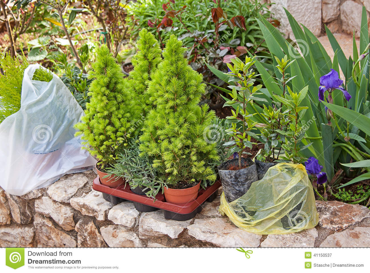 jeunes plantes des usines de jardin d coratives photo