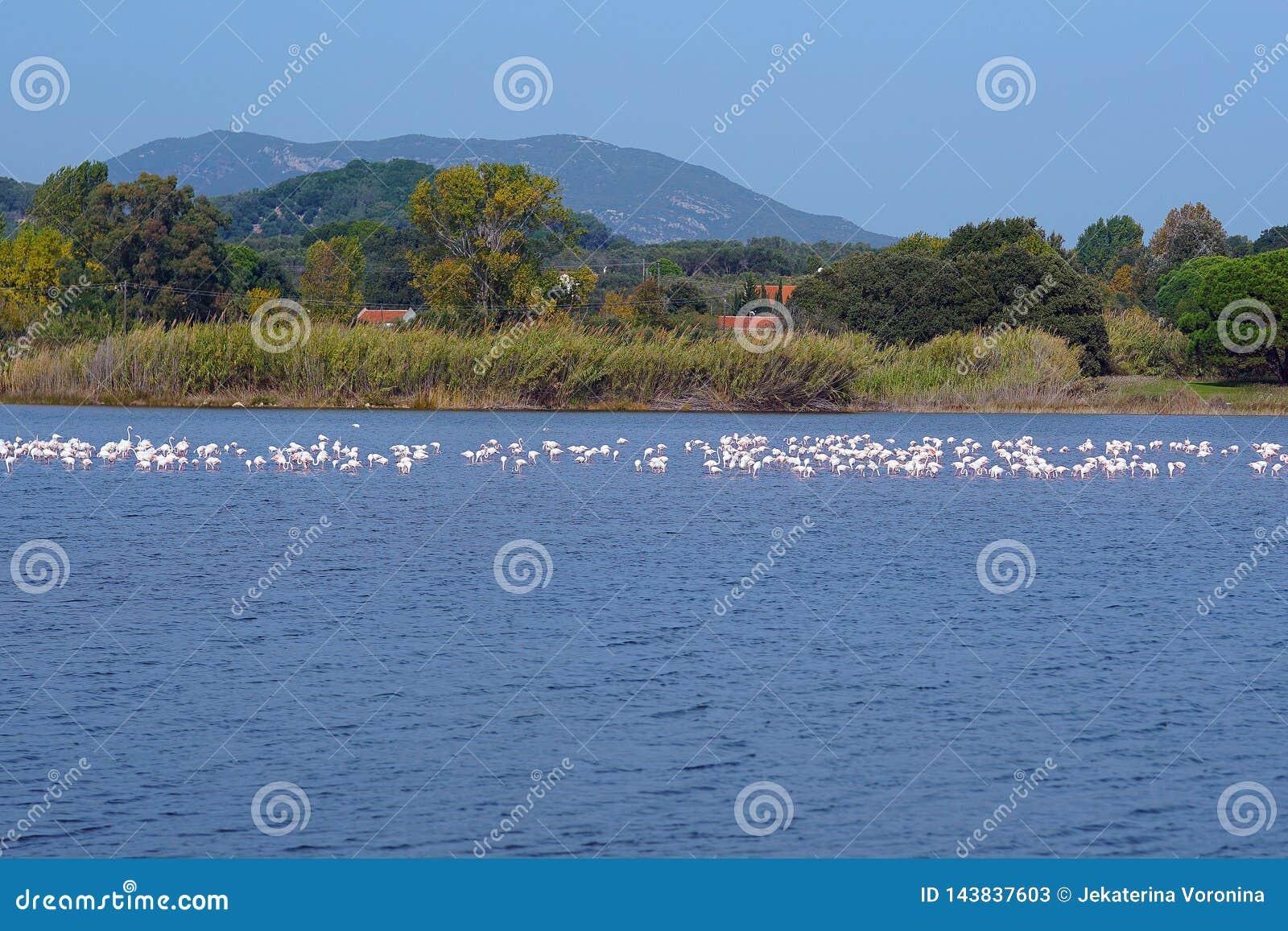 Jeziorny Korission jest bardzo znacząco ekosystemem Corfu, dokąd wiele ptaki migrujący jak różowi flamingi zatrzymują