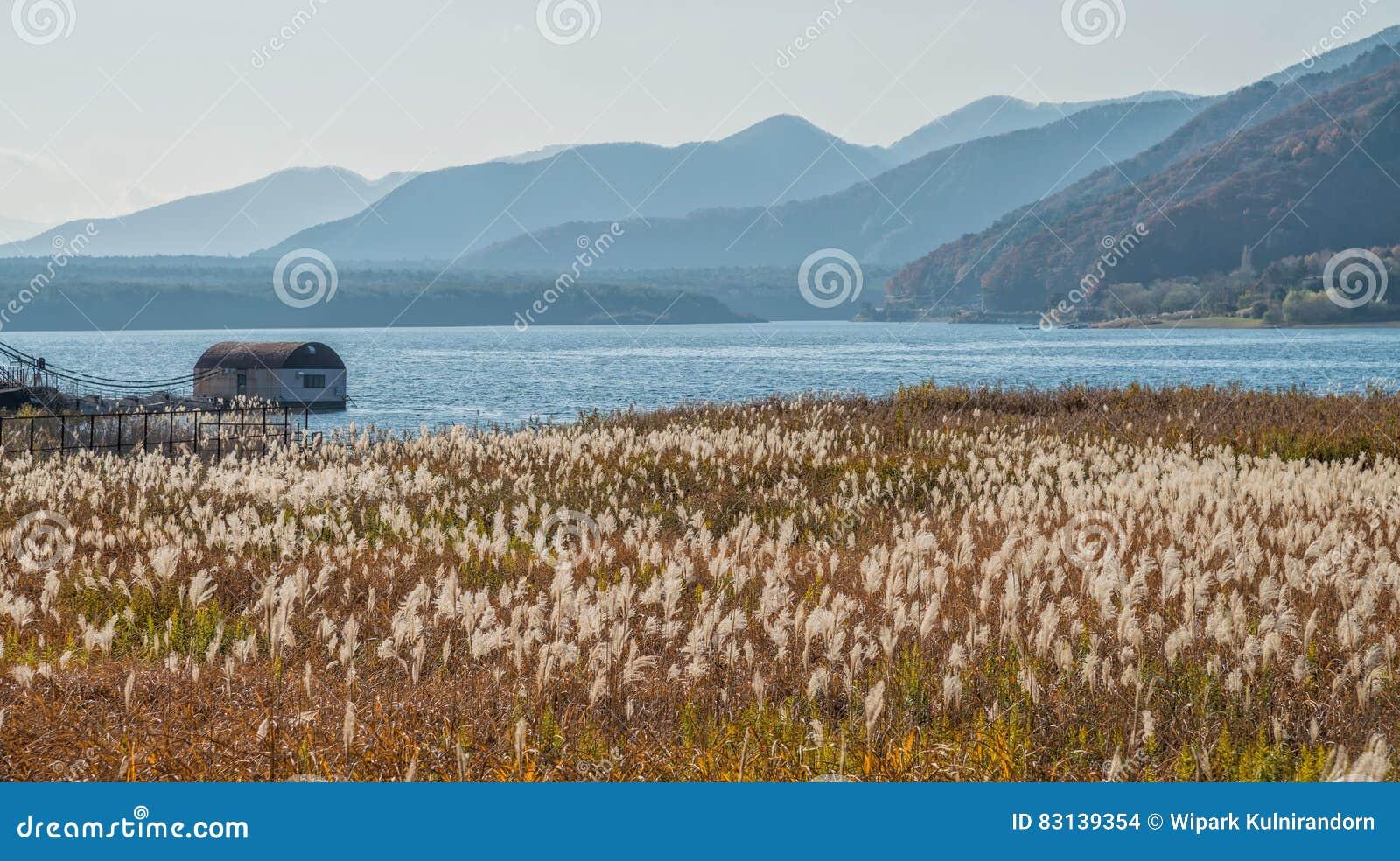 Jeziorny Saiko z trawy polem