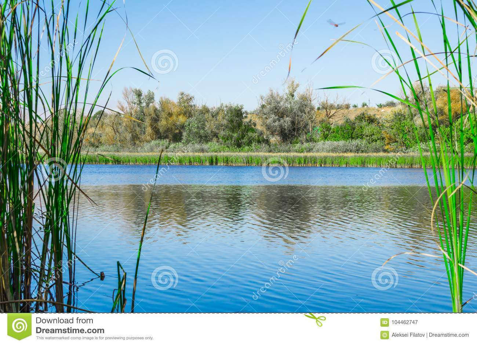 Jeziorny trawy dragonfly