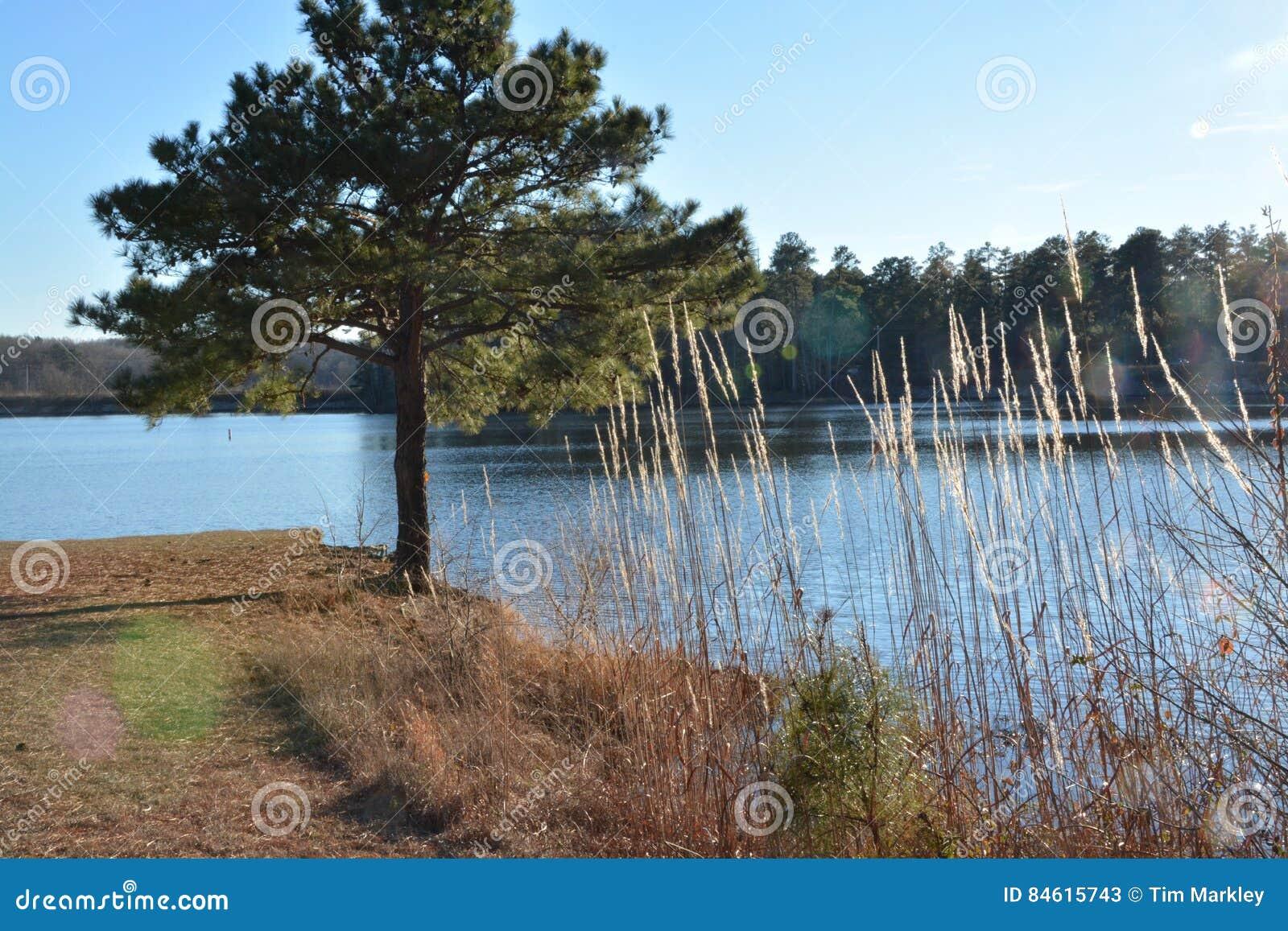 Jeziorny widok