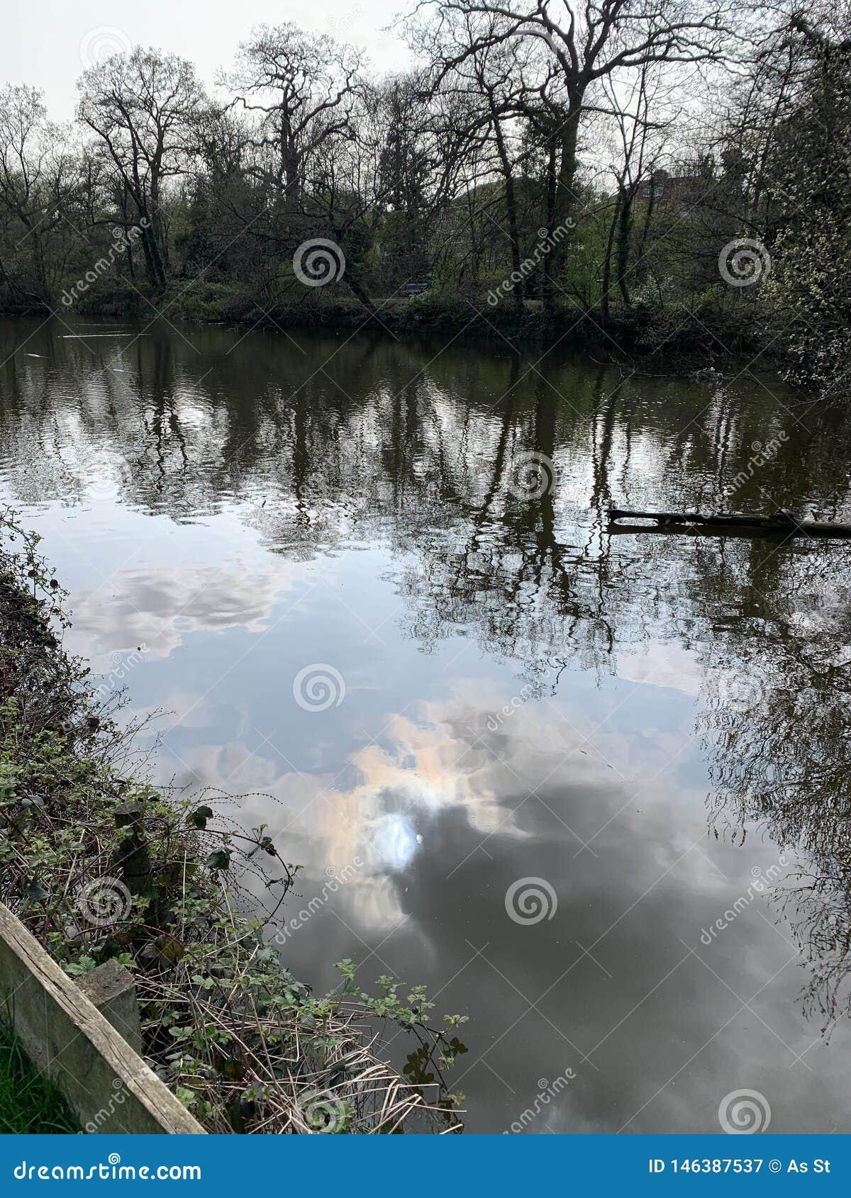 Jezioro - drzewny odbicie