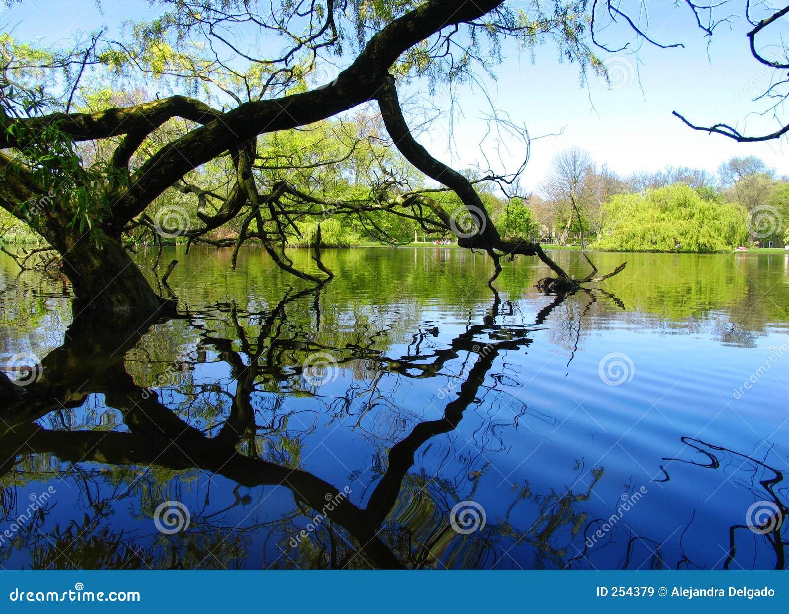 Jezioro drzewo