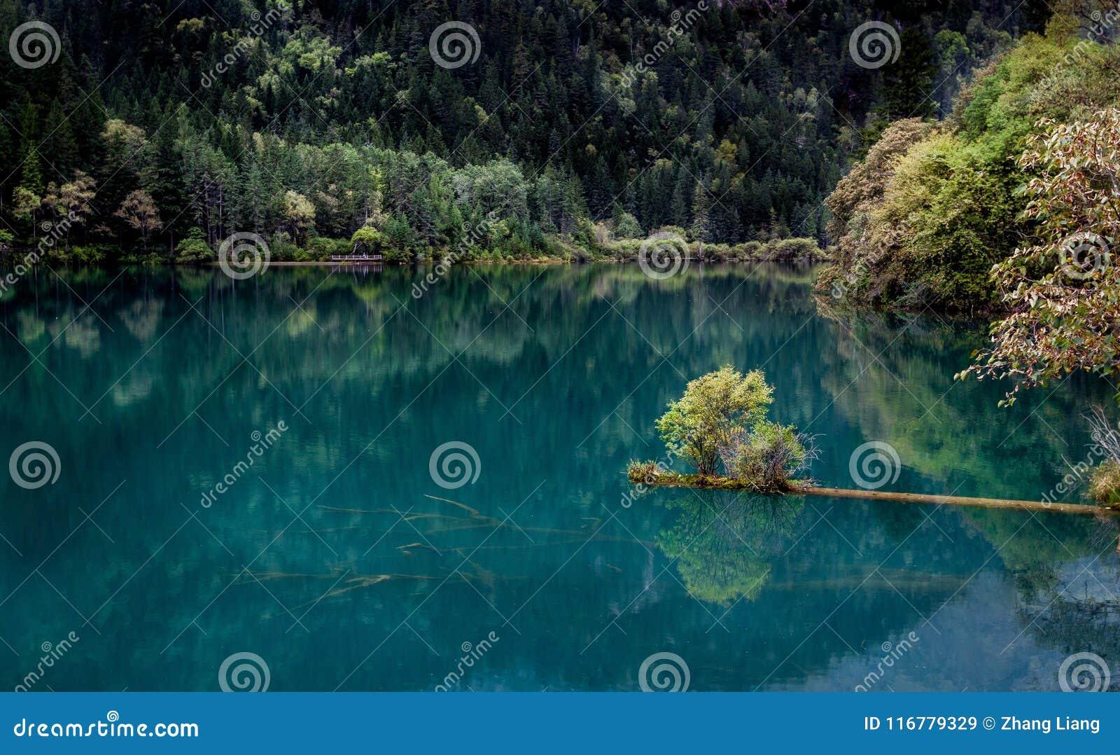 Jezioro i drzewa w Jiuzhaigou dolinie, Sichuan, Chiny