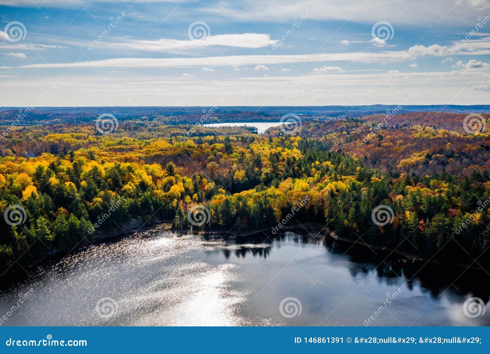 Jezioro i las w jesieni