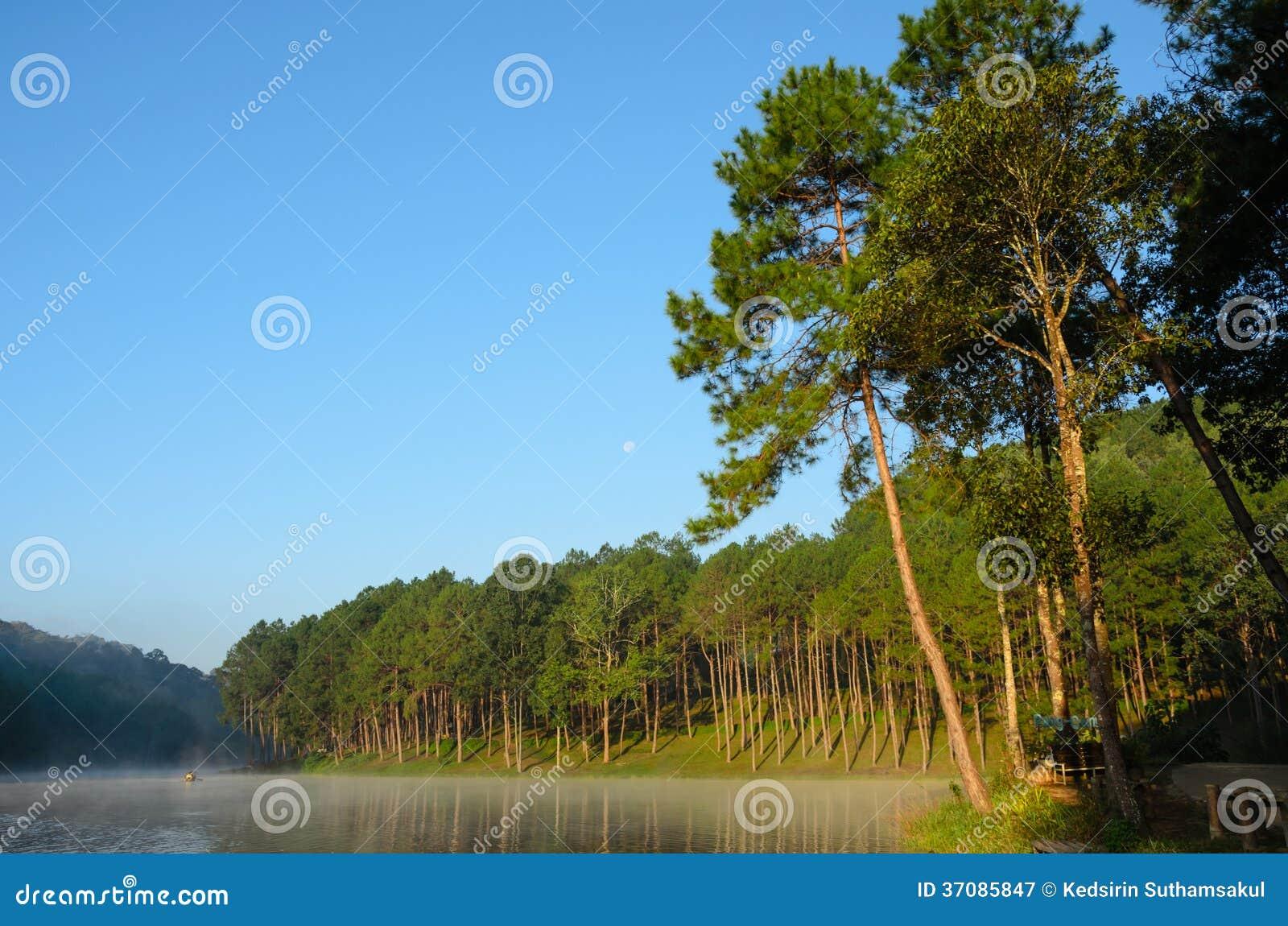 Download Jezioro I Sosna Przy Ssanie W żołądku Ung, Tajlandia Obraz Stock - Obraz złożonej z jezioro, odbicie: 37085847