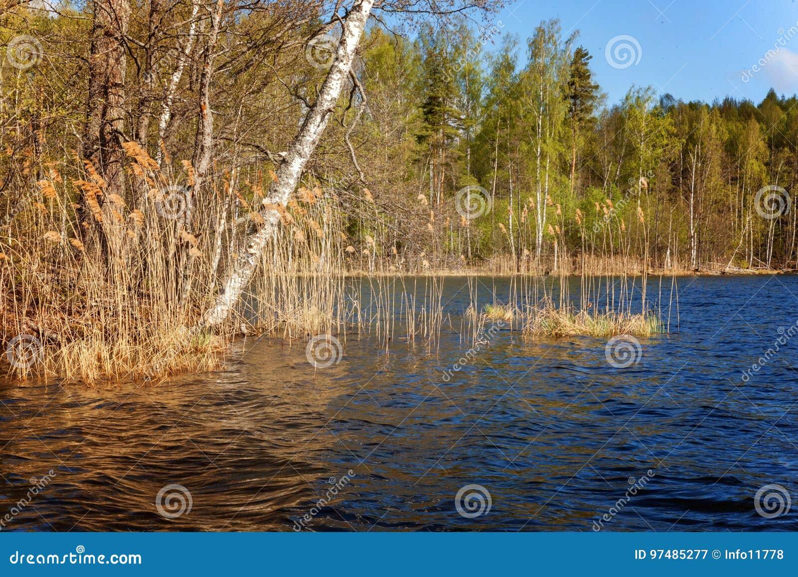 Jezioro przerastający z trawą