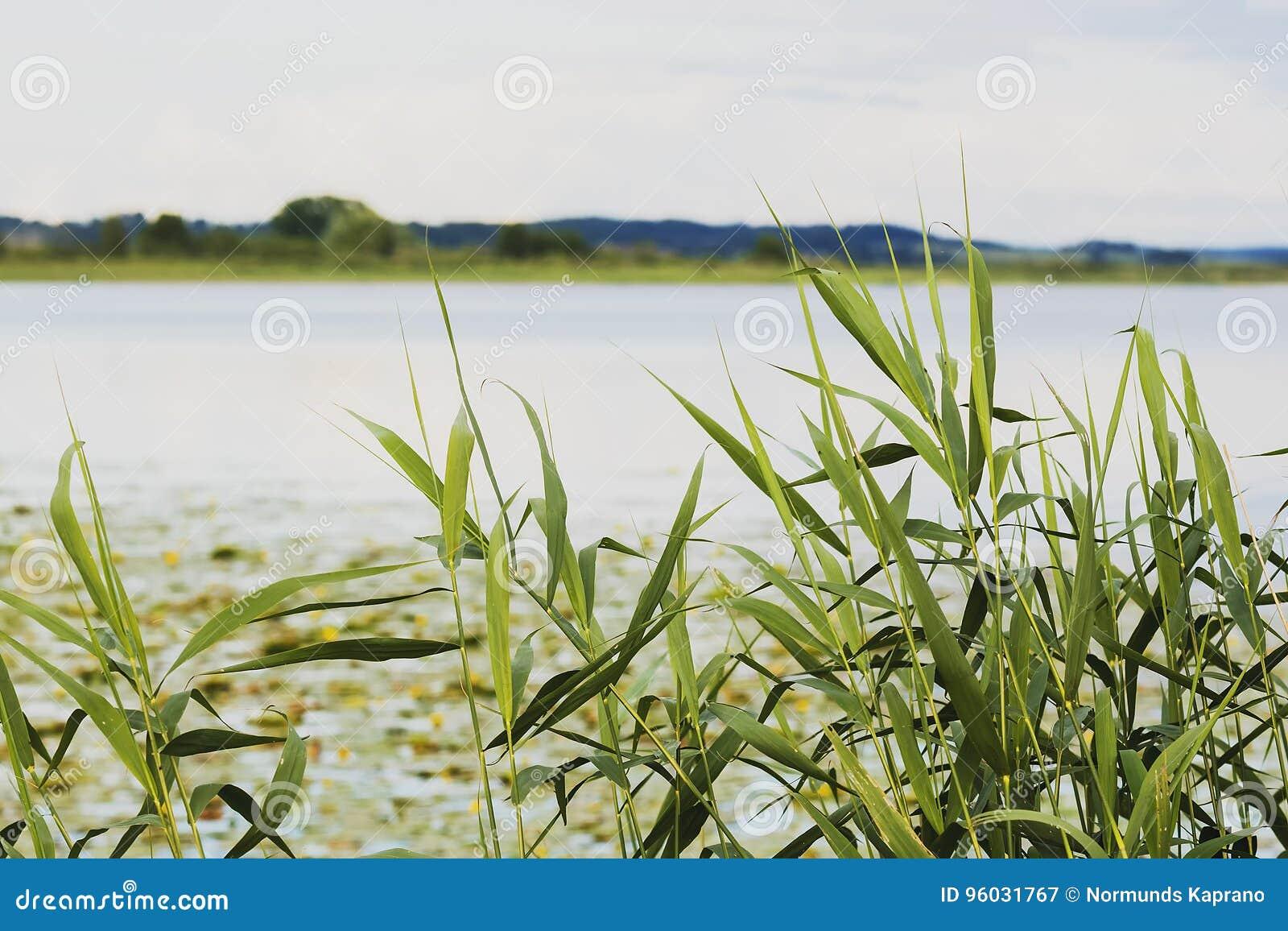 Jezioro w Latvia