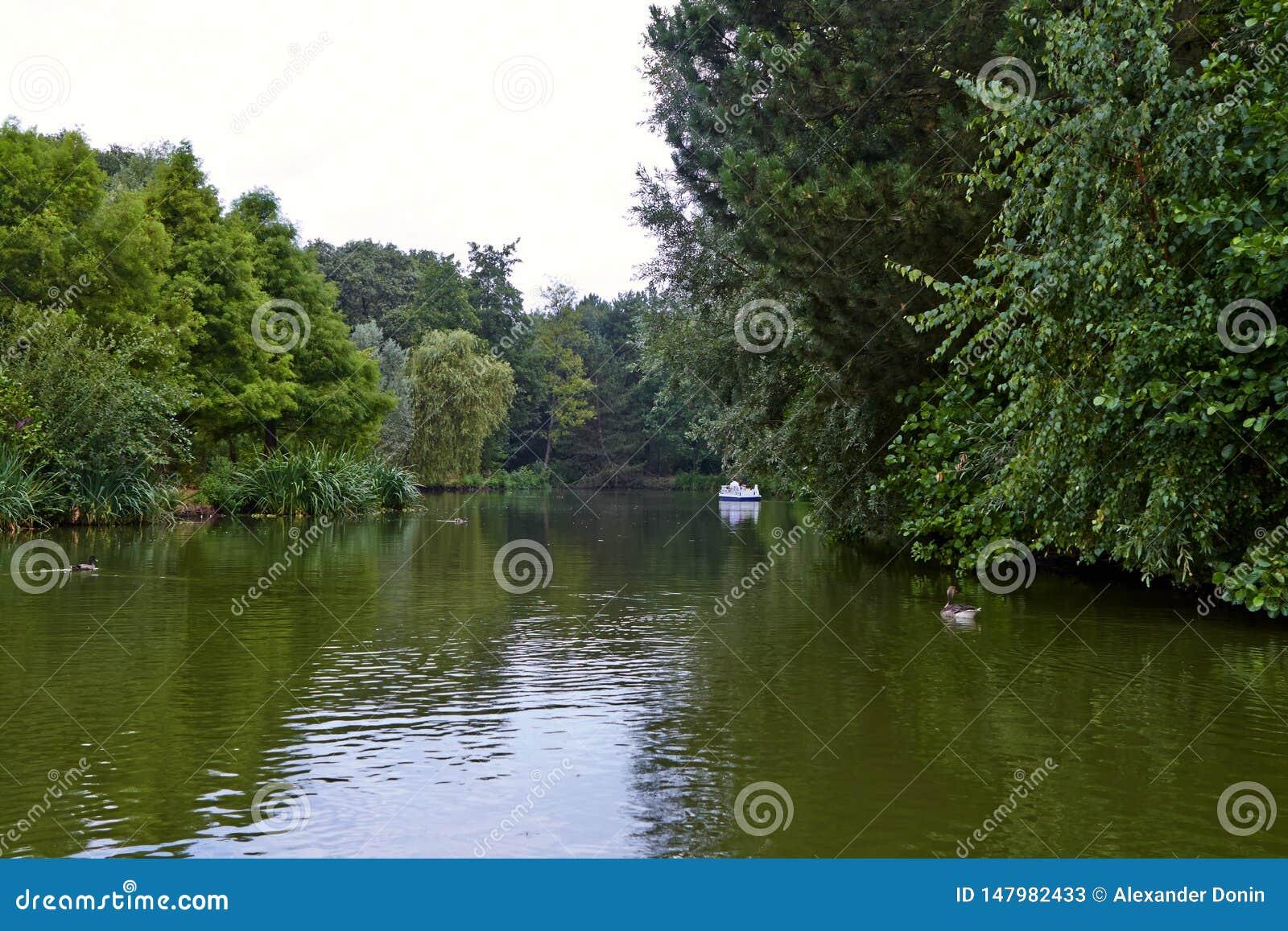 Jezioro w parku