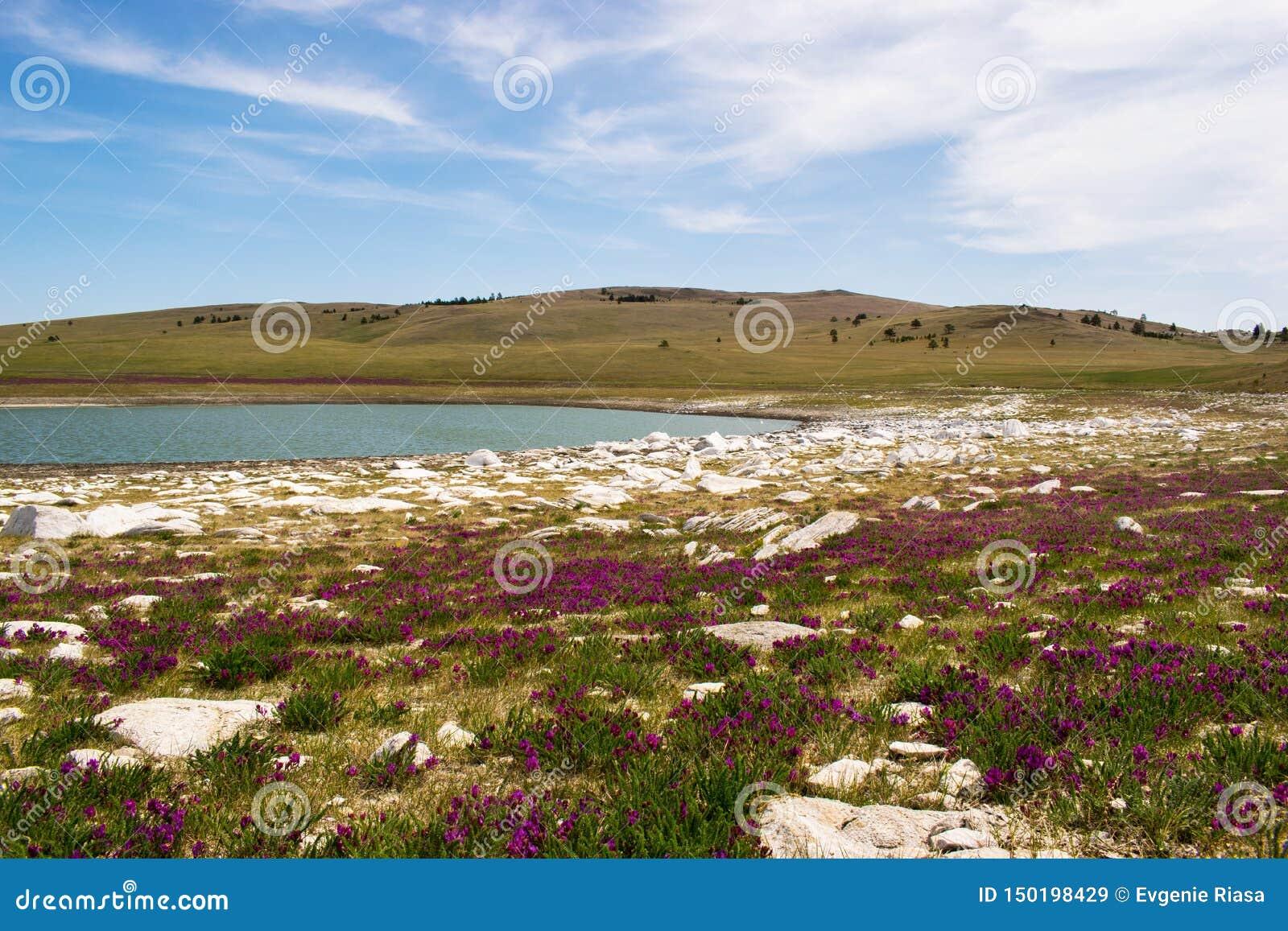 Jezioro jezioro w polu z kwiatami na brzeg jeziora na jasnym dniu