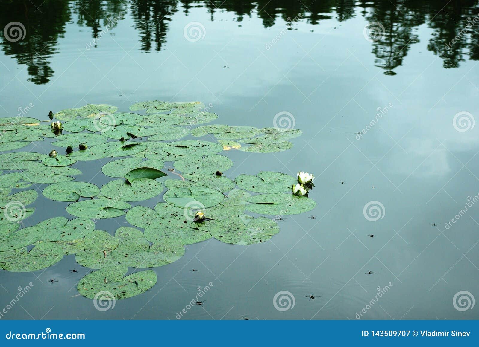 Jezioro Wodne leluje