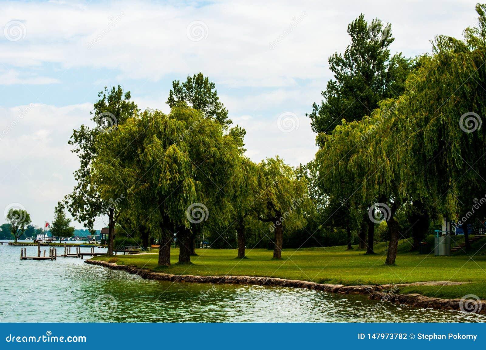 Jezioro z drzewami w Austria