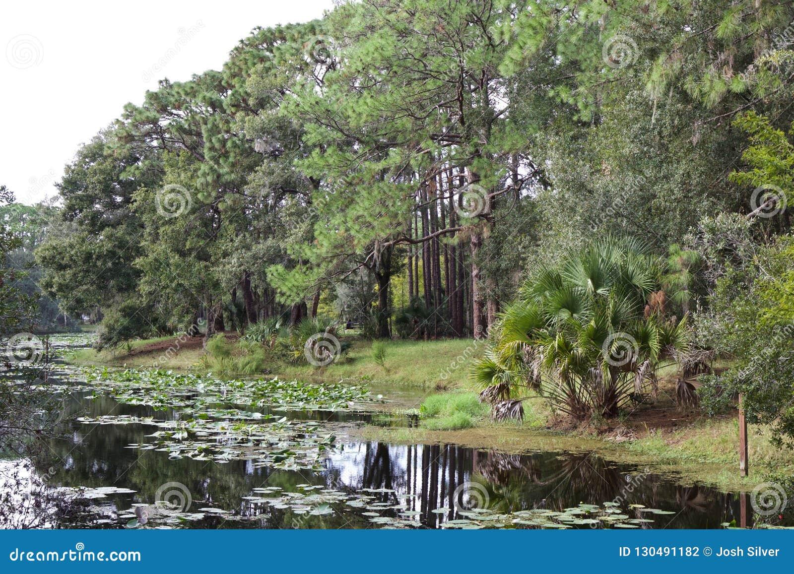 Jezioro z leluj drzewami i ochraniaczami