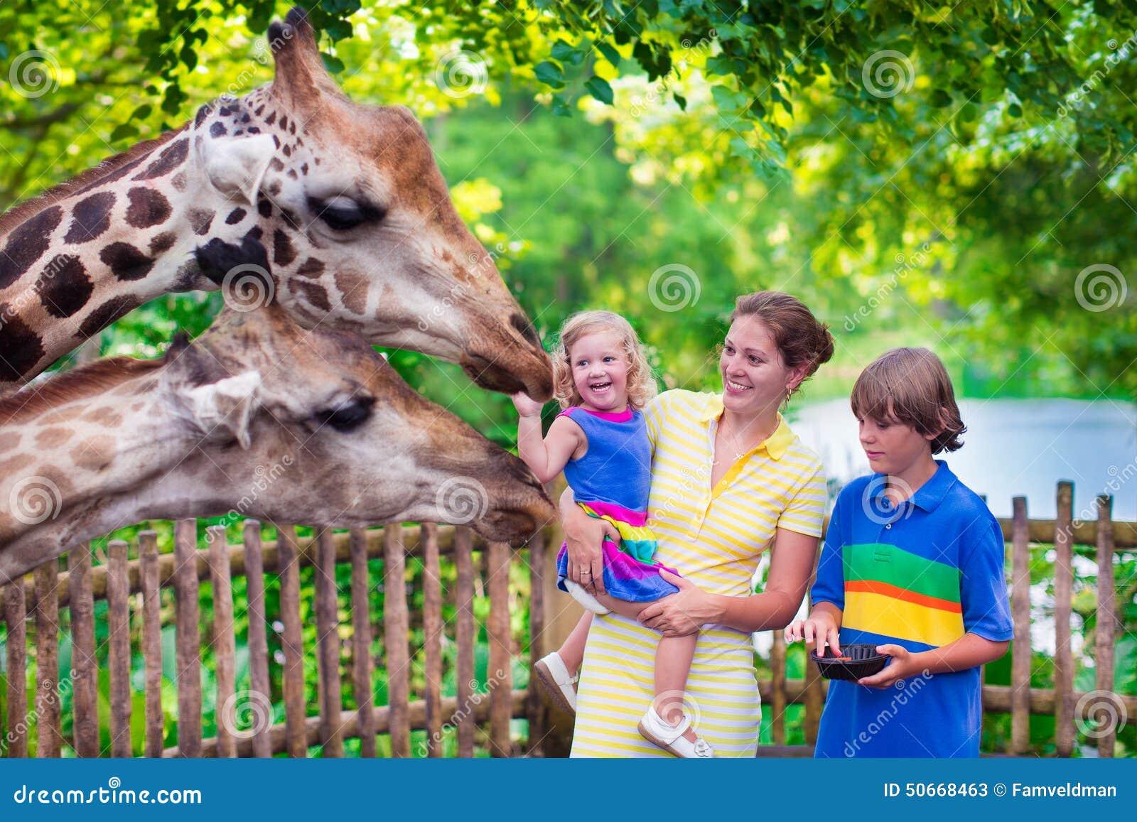 Jirafa de alimentación de la familia en un parque zoológico