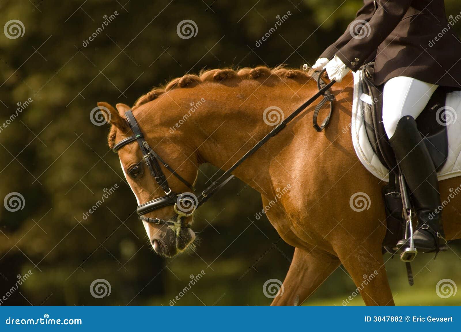 Jockey auf einem schönen Pferd