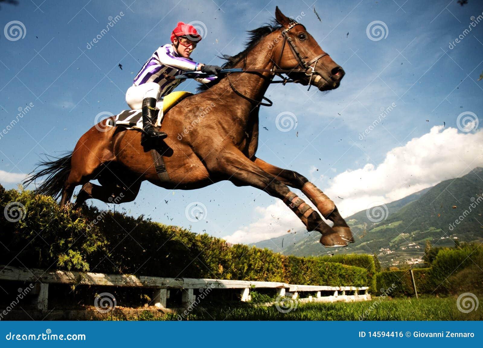Jockey sur le cheval