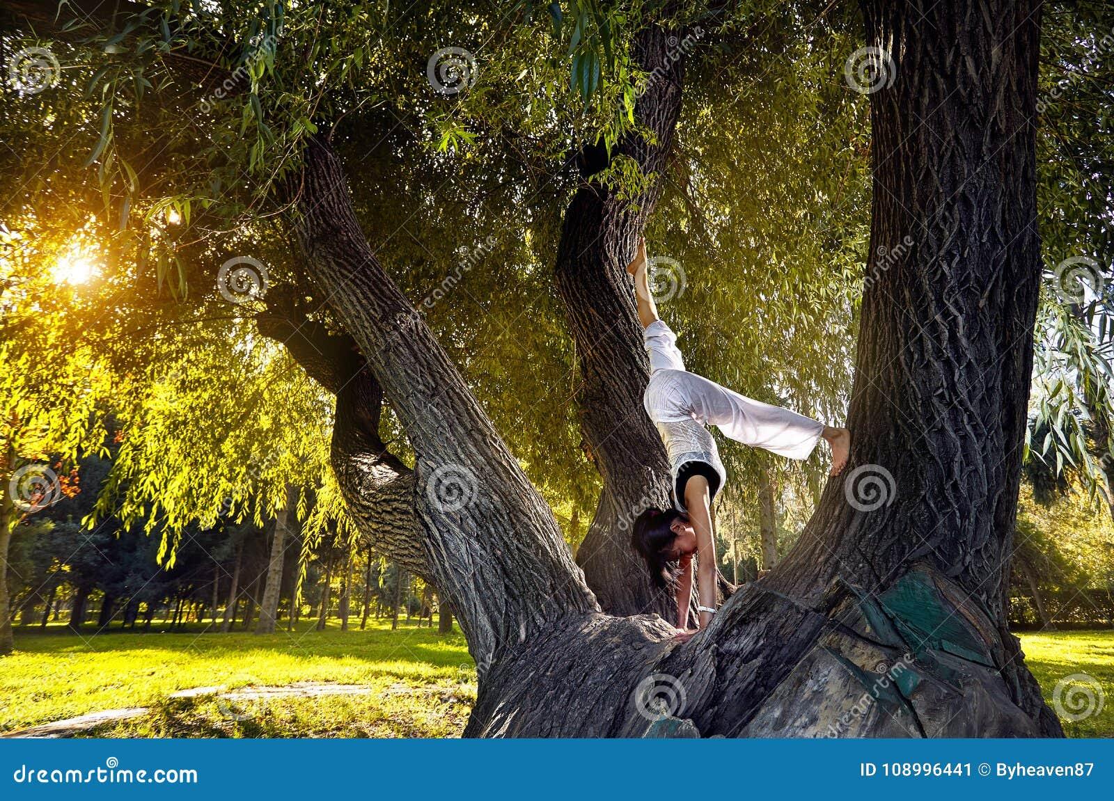 Joga na drzewie