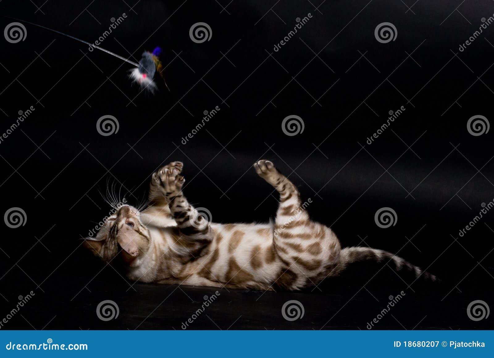 Jogando o gato